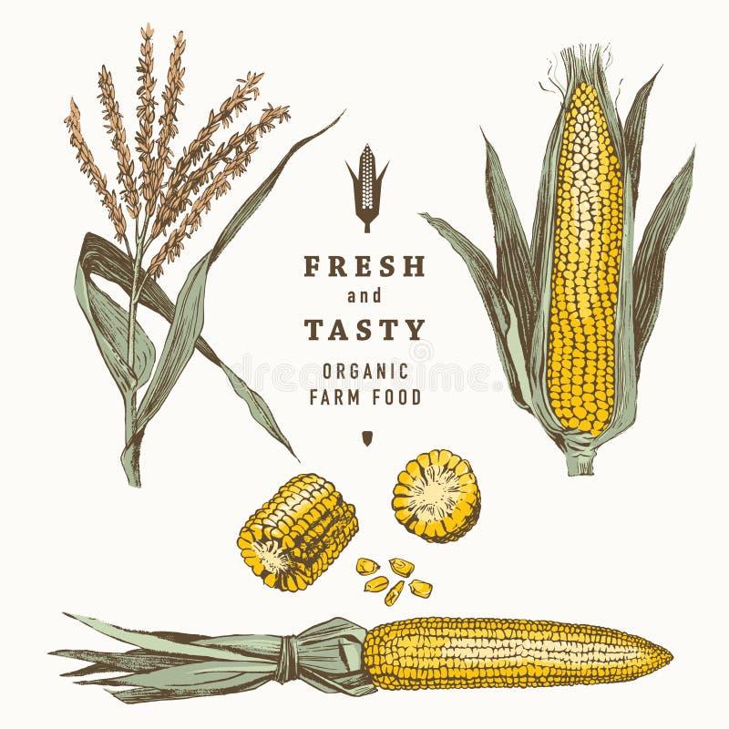 Havre på uppsättningen för majskolvtappningdesign royaltyfri illustrationer