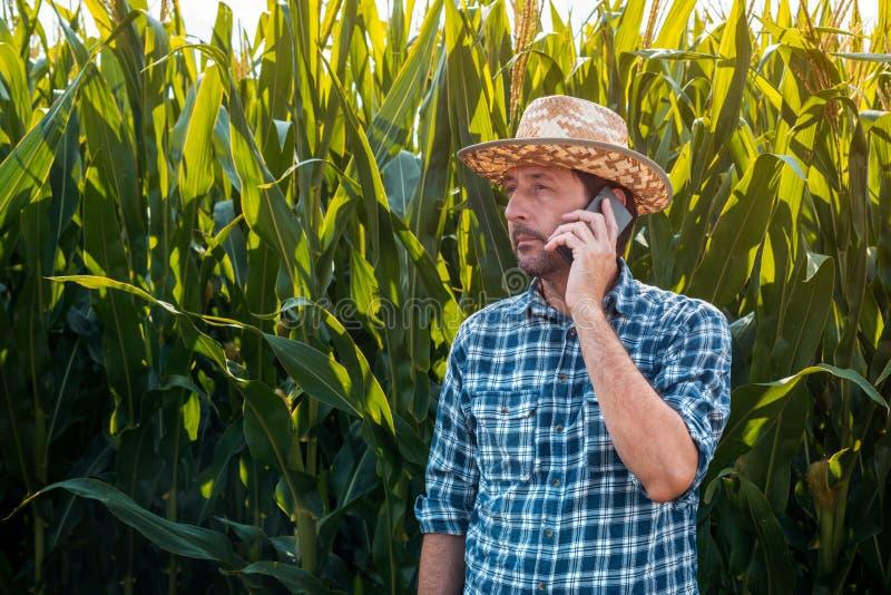 Havrebonde som talar på mobiltelefonen i skördfält royaltyfri bild