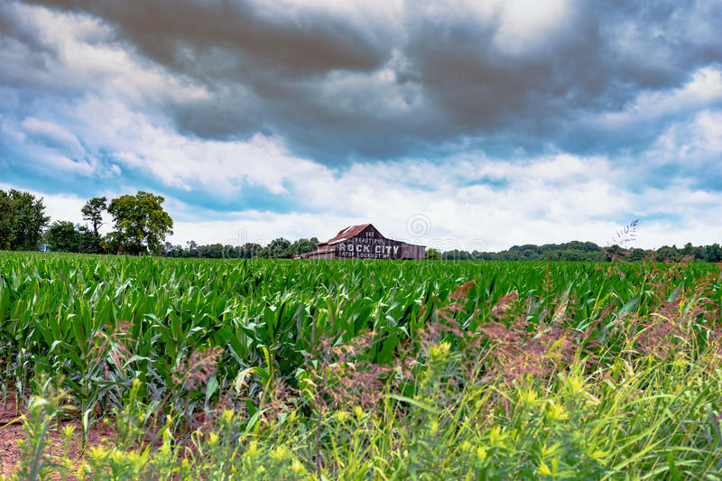 Havrefält med ladugården i bakgrund arkivfoto