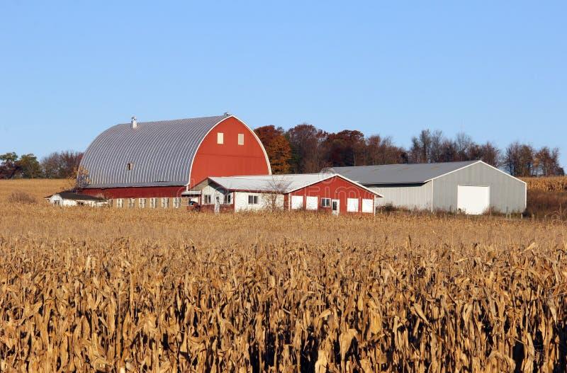 Havrefält med mejerilantgården i bakgrunden royaltyfri bild
