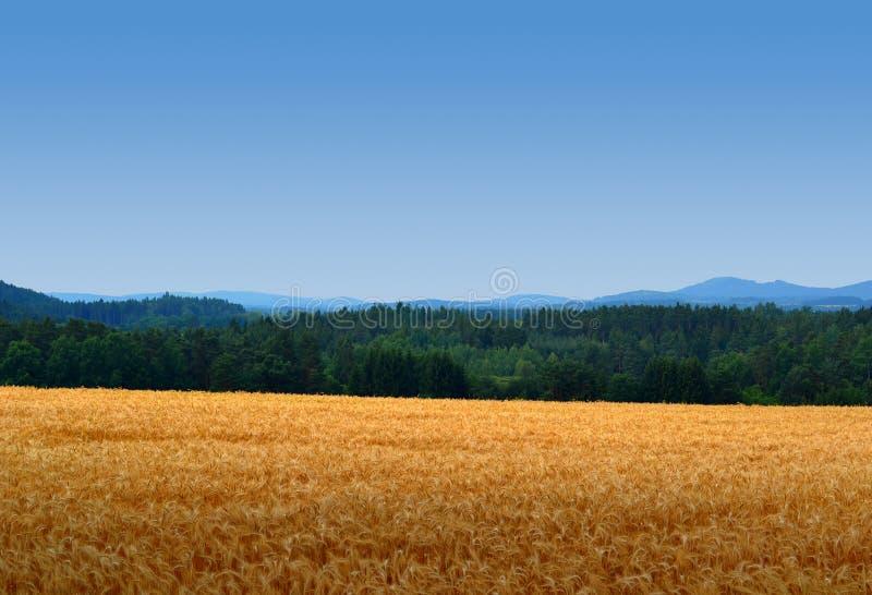 Havrefält med skogar och himmel arkivfoton