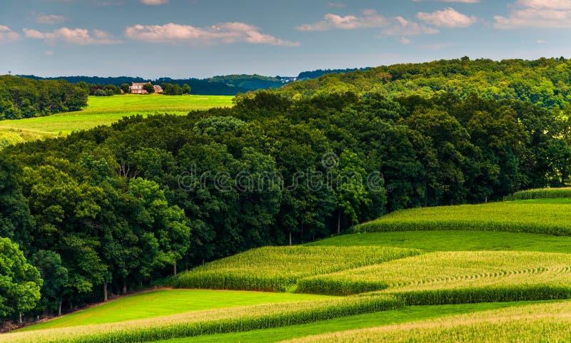 Havrefält och kullar i lantliga sydliga York County, Pennsylvani royaltyfri bild
