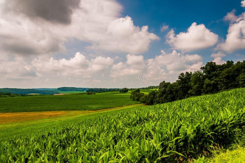 Havrefält och Rolling Hills i lantliga York County, Pennsylvania royaltyfria foton