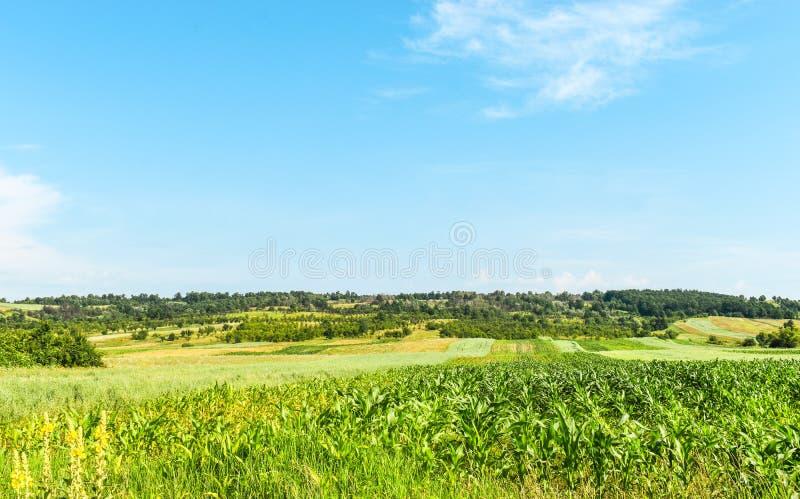 Havref?lt i en solig sommardag Sädes- bruka jordbruk i Rumänien arkivfoton