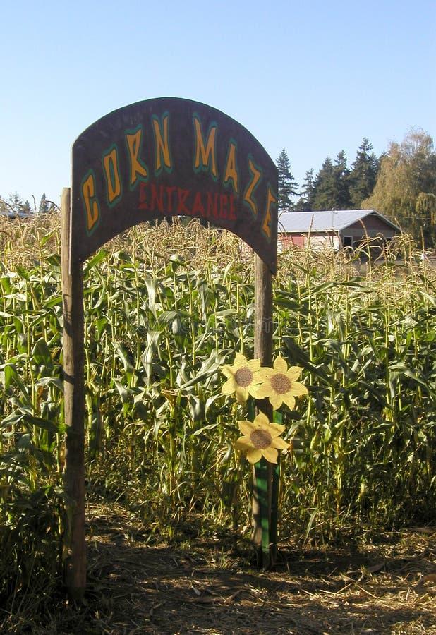 Download Havremaze arkivfoto. Bild av ingång, cornfield, maze, cornstalks - 30474
