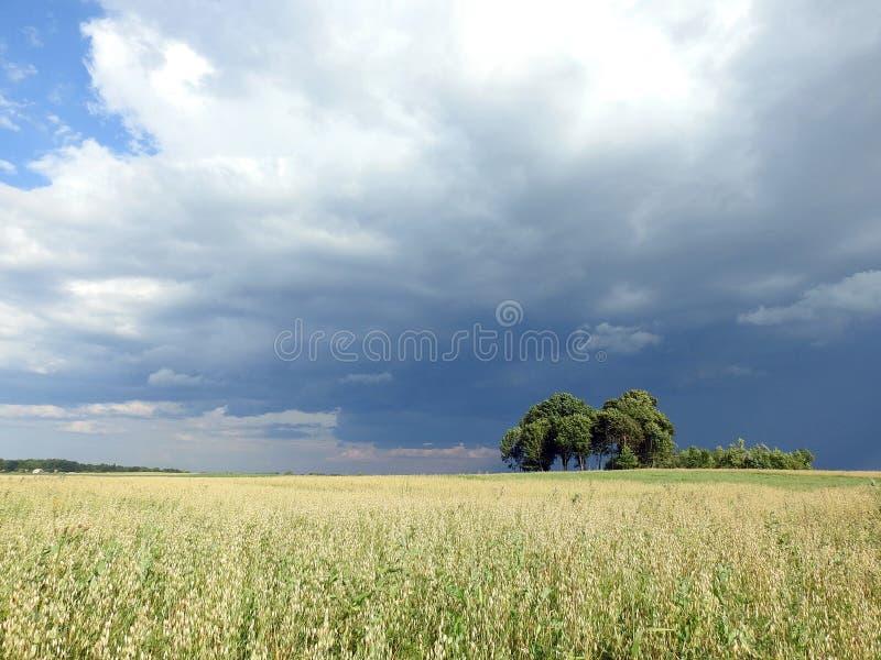Havren sätter in och härlig molnig himmel, Litauen arkivbild