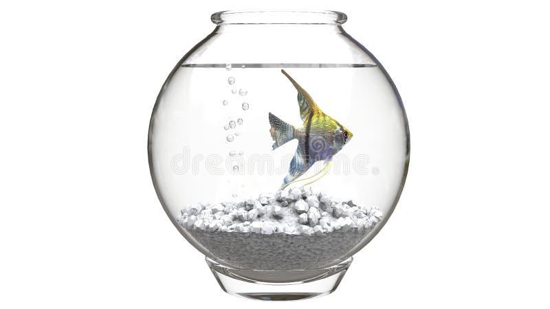Havsängel i fishbowl med vita kiselstenar och luftbubblor arkivfoto