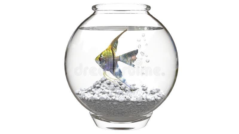 Havsängel i liten fishbowl fotografering för bildbyråer
