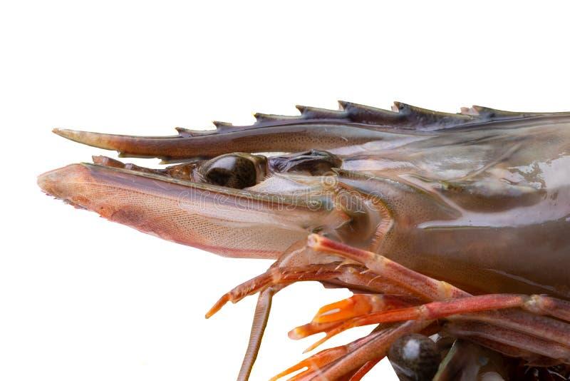 Havs- bakgrund Closeup av en ny rå räka med fokusen på huvudet Makro av huvudet från sidan sund mat royaltyfria foton