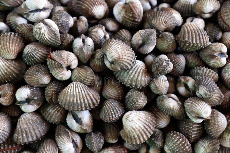 Havs- bubblor, hög av den bästa sikten för nya blodbubblor, bubblor eller ny rå skaldjur för kammussla, till salu bubblaskal royaltyfria bilder