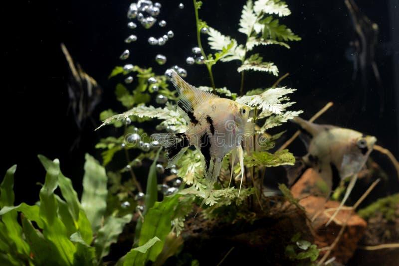 Havs?ngelbakgrund av aquascape f?r vatten- v?xter royaltyfri foto