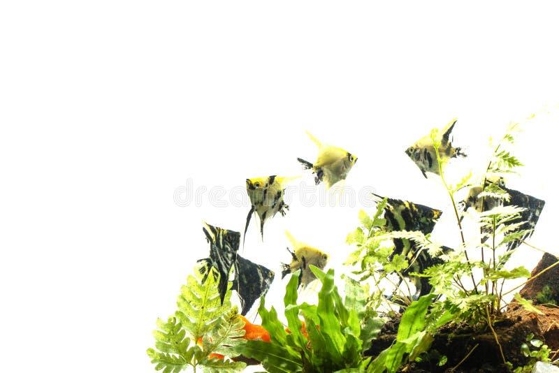 Havs?ngelbakgrund av aquascape f?r vatten- v?xter arkivbilder