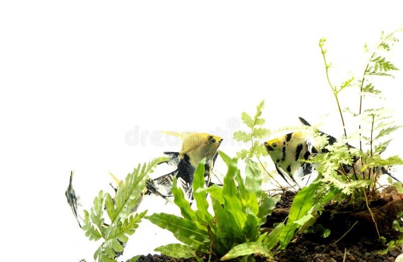 Havs?ngelbakgrund av aquascape f?r vatten- v?xter arkivfoto