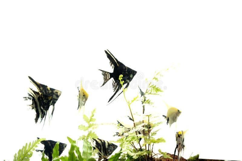 Havs?ngelbakgrund av aquascape f?r vatten- v?xter royaltyfri fotografi