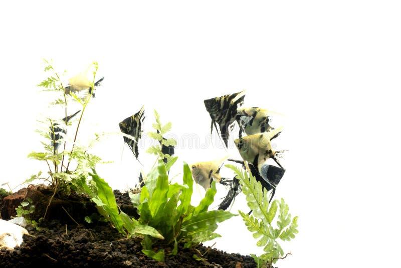 Havs?ngelbakgrund av aquascape f?r vatten- v?xter arkivfoton