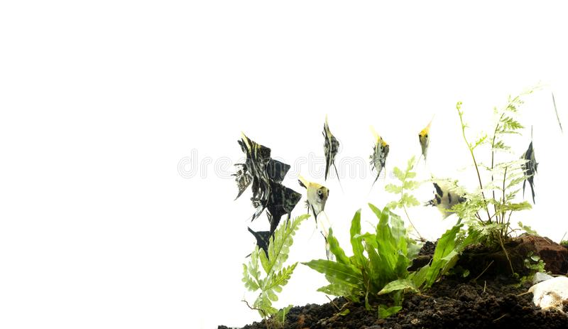 Havs?ngelbakgrund av aquascape f?r vatten- v?xter royaltyfria bilder