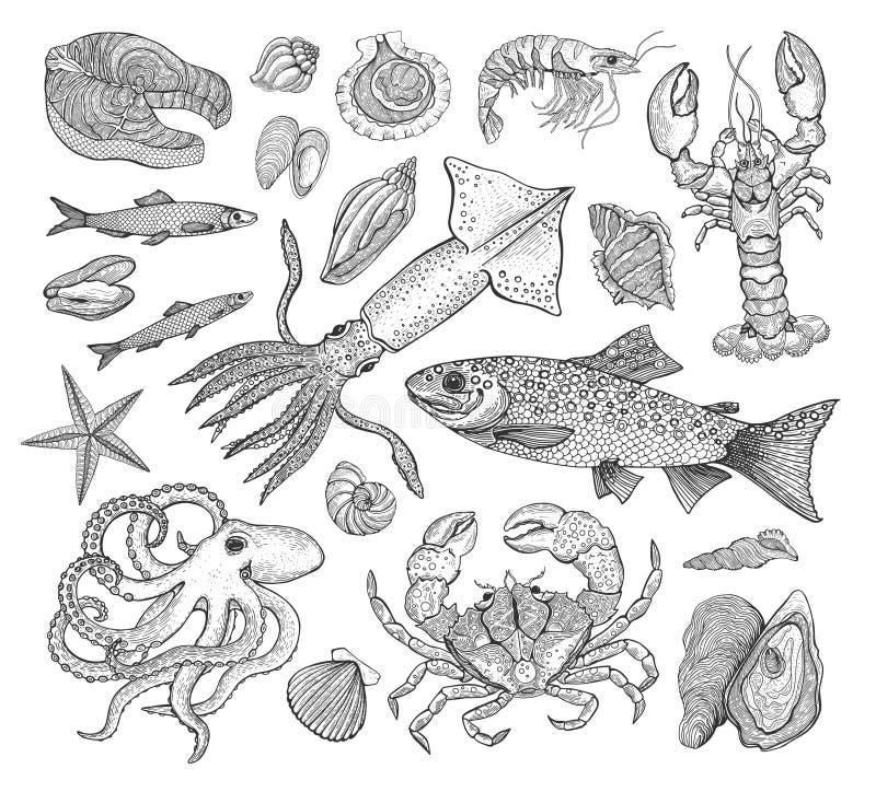 Havs- stor samling för vektor med krabban, hummer, räka, fisk, forell, tioarmad bläckfisk, snäckskal, bläckfisk Tappninggravyr royaltyfri illustrationer