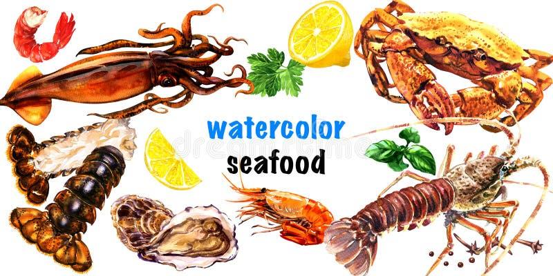 Havs- uppsättning, ny hummer, krabba, ostron, musslor, räka, tioarmad bläckfisk, räka, havsmat som isoleras, beståndsdelar för re royaltyfri illustrationer