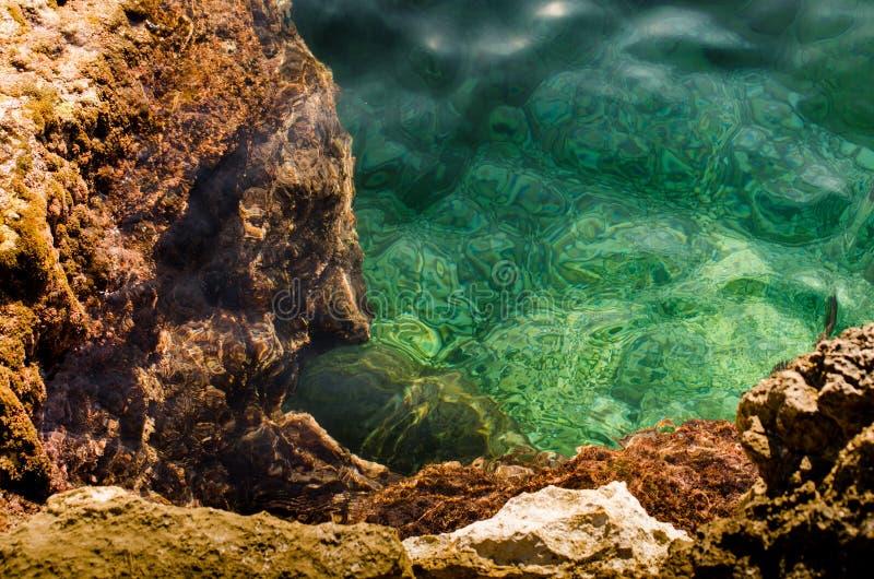 Havsbotten med den gröna algen och stenar arkivfoto