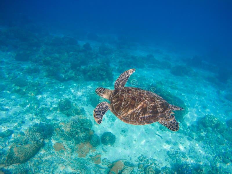 Havsdjur och växter Undervattens- foto för oceanisk miljö Havsbotten med sand- och för korallrev bildande arkivbilder