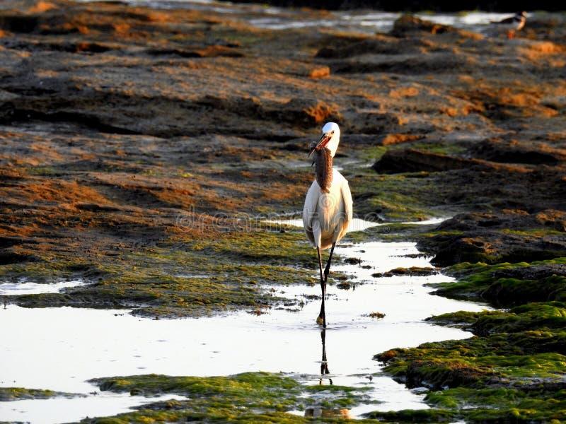 Havsfågel i sommar arkivfoton