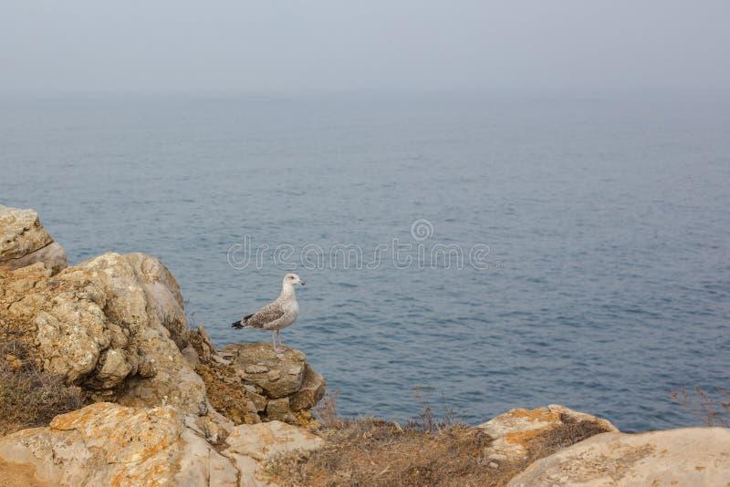 Havsfågel som står med fötterna på klippan i Atlanten royaltyfria bilder