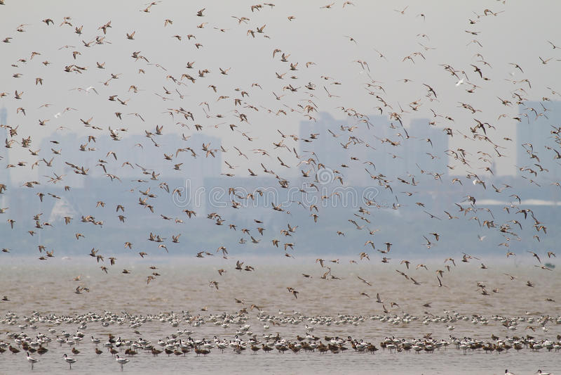 Havsfåglar på Mai Po Nature Reserve royaltyfri fotografi