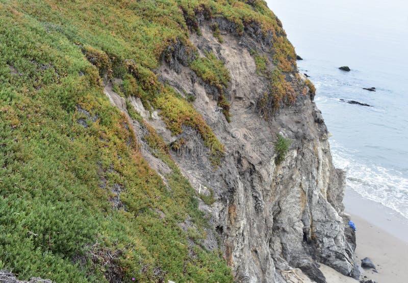 Havsfikonträd den carpobrotuschilensisen och klippan som ner leder royaltyfri fotografi