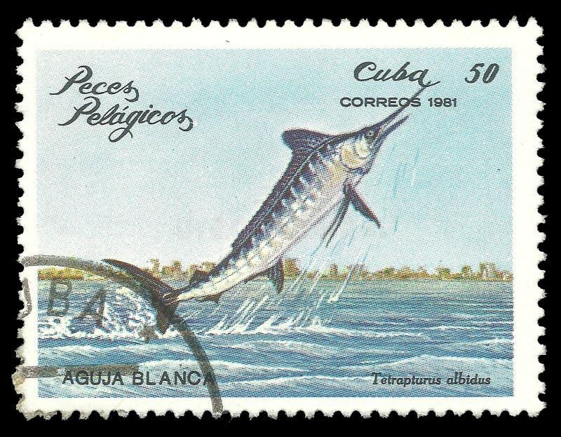 Havsfiskar, vit Marlin royaltyfri fotografi
