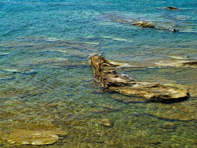 Havsfiskmåsen på vaggar i havet fotografering för bildbyråer