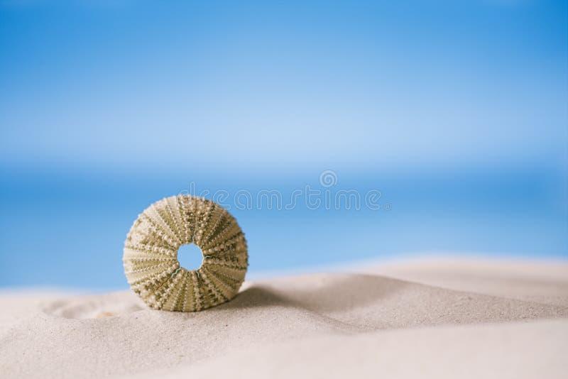 Havsgatubarn på den vita sandstranden arkivbild