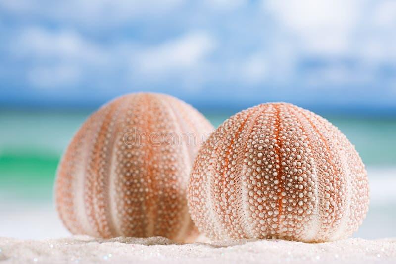 Havsgatubarn på den vita sandstranden arkivfoton