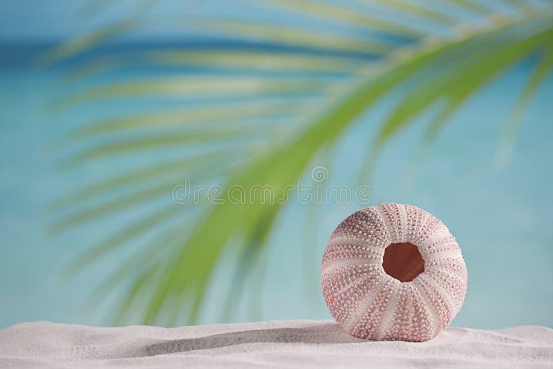 Havsgatubarn på den vita sandstranden royaltyfri fotografi