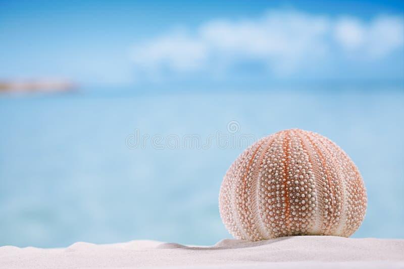 Havsgatubarn på den vita sandstranden fotografering för bildbyråer