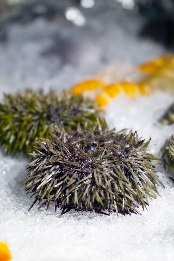 Havsgatubarn svart is isolerad skaldjur arkivfoton