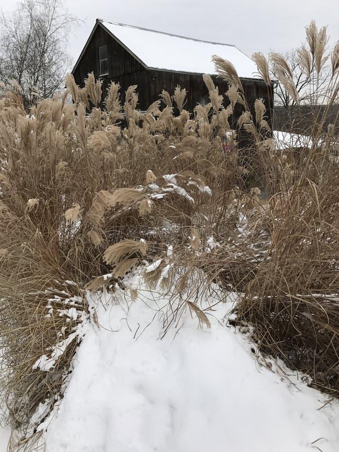 Havsgräs i vinter fotografering för bildbyråer