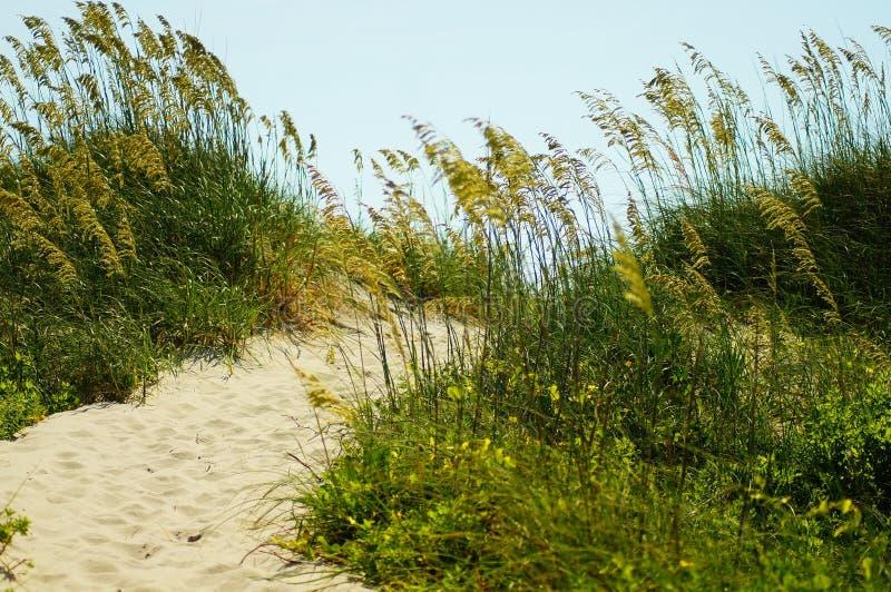 Havshavre och sanddyn av de yttre bankerna av NC arkivbild