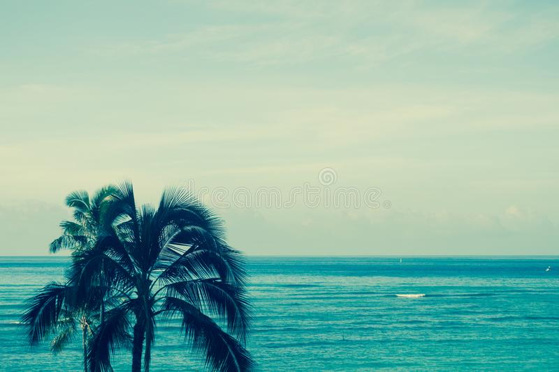 Havsikt med palmträd i Oahu, Hawaii fotografering för bildbyråer