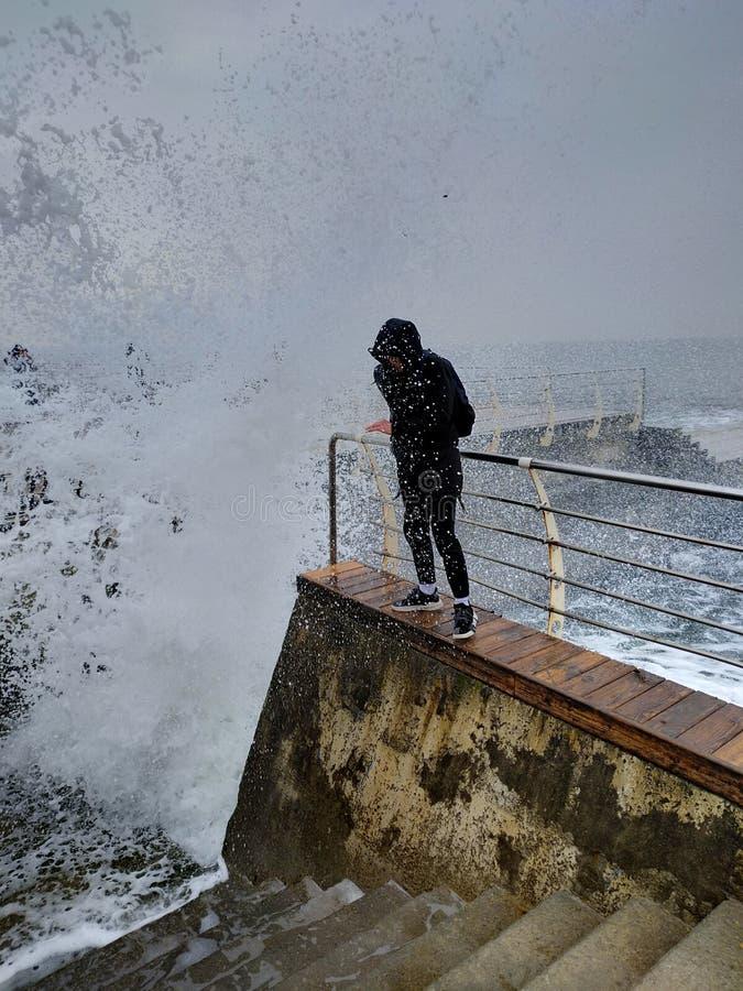 Havsilska fotografering för bildbyråer