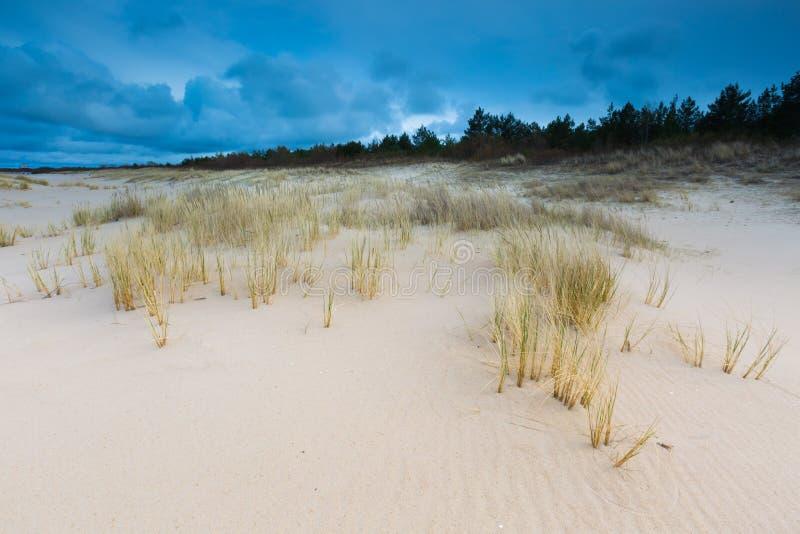 Havskust med gräs Härligt landskap royaltyfria bilder
