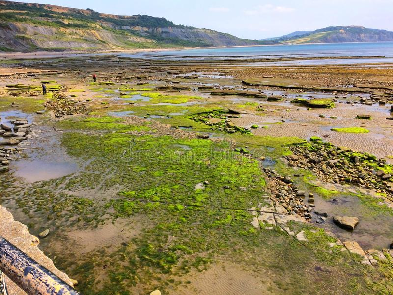 Havskustlinjesikt från Lyme Regis i Dorset England arkivbilder
