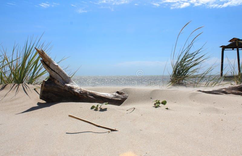 Havslandskap med sand, journalen och gräs royaltyfri foto