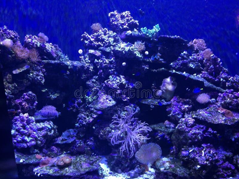 Havsliv i NOLA royaltyfria foton