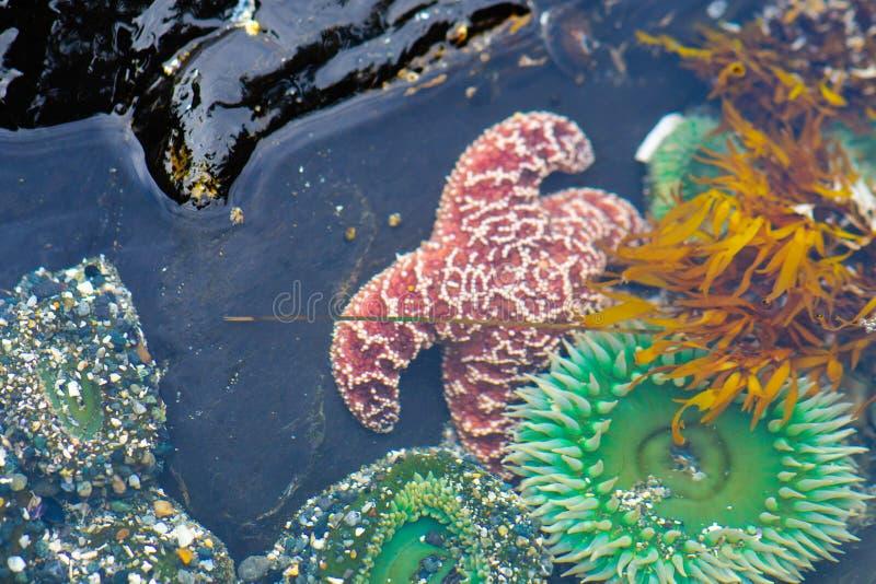 Havslivstid arkivbilder