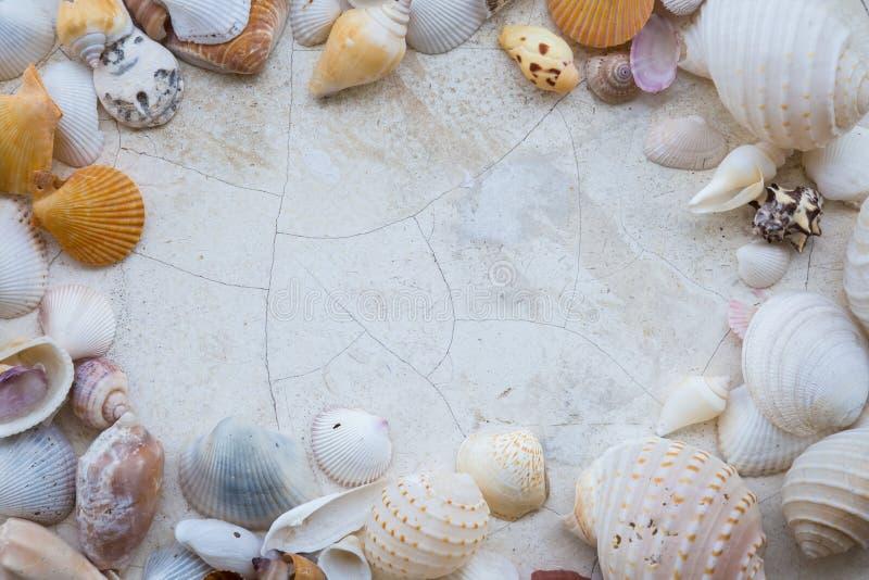 HavsShell bakgrund med utrymme för text royaltyfria bilder