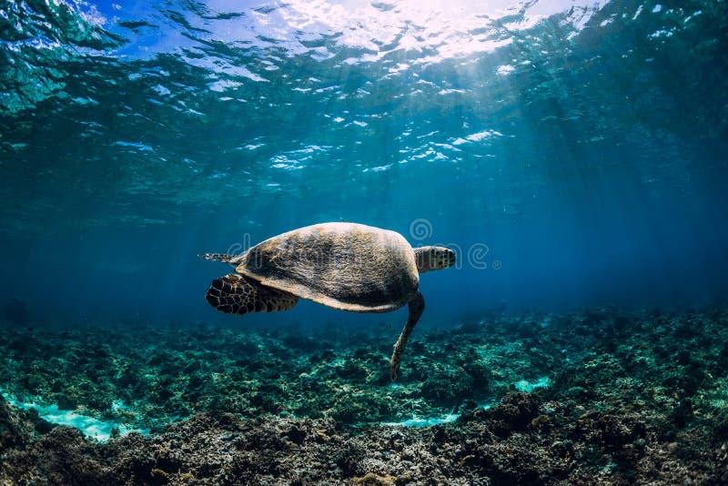 Havssköldpadda som svävar över naturlig havbakgrund Closeup för sköldpadda för grönt hav med yttersida för solljushovatten royaltyfri fotografi