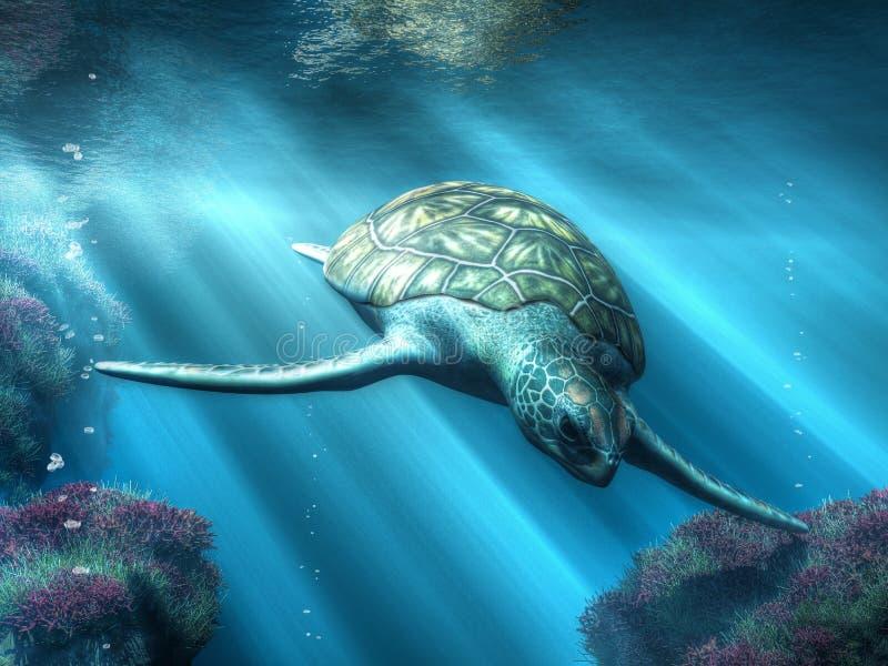 Havssköldpaddan vektor illustrationer