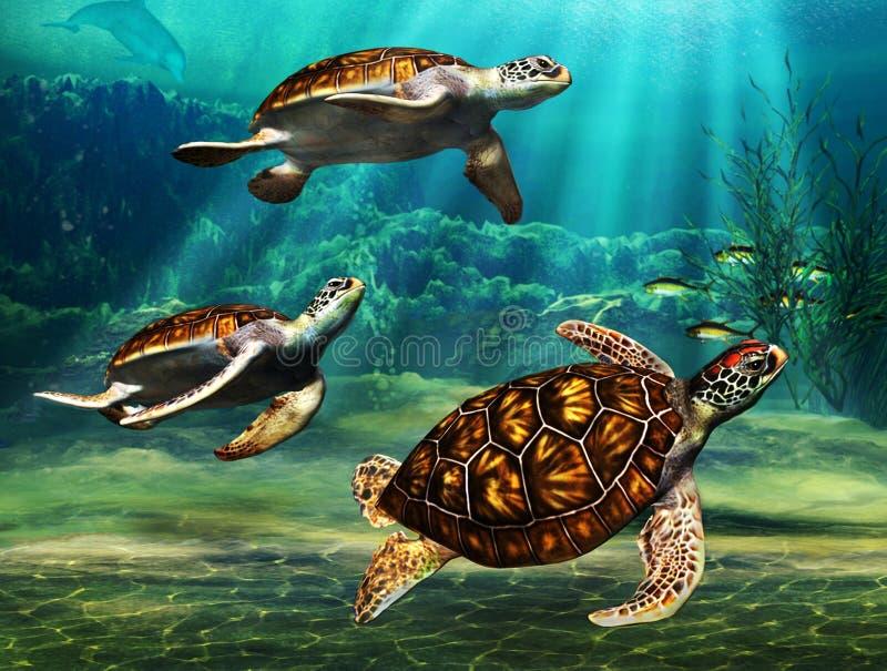 Havssköldpaddor vektor illustrationer