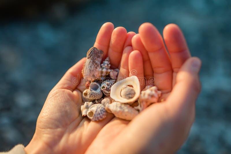 Havsskal i handen arkivfoton