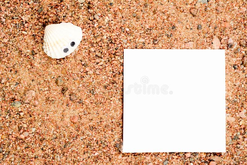 Havsskal med googly ögon, lögn på sanden och blick på vitbok för kopieringsutrymme, närbildmakro arkivfoton